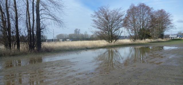 ag wetland